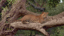 Wilpattu National park safari (All inclusive 02 Days Tour), Colombo, Attraction Tickets