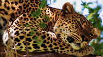 Yala Safari Experience, Colombo, Private Sightseeing Tours