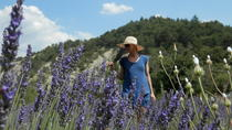 Private Guided Walking Tour in the Hills of Provence Including Gordes and Sénanque Abbey from ...