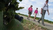 Private Guided Walking Tour Through the Vines of Chateauneuf du Pape from Avignon, Avignon, Custom ...