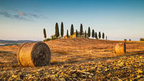 Private Chianti Tuscany Wine Tasting Tour from Florence, Florence, Day Trips