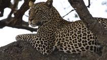 5-Day Tanzania Adventure Safari from Arusha , Arusha, 5-Day Tours