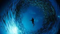 PADI Discover Scuba Diving Course in La Paz, La Paz, Scuba Diving