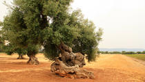 Extra virgin Olive oil tasting tour, Puglia, Food Tours