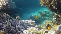 Full-Day Snorkeling Tour to Utopia Island from Luxor, Luxor, Day Cruises