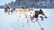 Dog Sledding Tour from Toronto, Toronto
