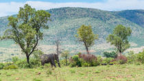Full-Day Pilanesburg Nature Reserve Tour, Johannesburg, Safaris