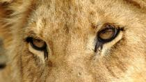 Half Day Lion Park tour, Johannesburg, Day Trips