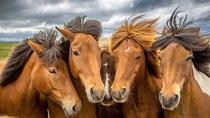 1.5-Hour Icelandic Horse and Stables Experience in Reykjavik, Reykjavik, Horseback Riding