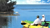 Key West Backcountry Kayak and Paddleboard Eco Tours, Key West, Stand Up Paddleboarding