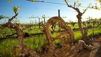 Kaesler Vineyard Old Vine Tour, Barossa Valley, Wine Tasting & Winery Tours