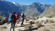 2-Day Colca Canyon Trek with Optional Hiking Experience, Arequipa, Overnight Tours