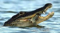 Everglades National Park Moerassafari Private Airboat Tour, Miami, Private Sightseeing Tours