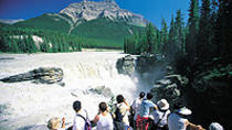 Jasper City Sightseeing Tour and Maligne Lake Cruise