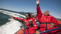 Bowen Explorer Sea Safari Tour, Vancouver, Jet Boats & Speed Boats