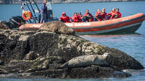 Sea Safari Tour von Vancouver, Vancouver, Jet Boats & Speed Boats