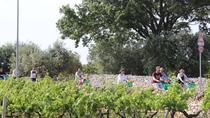 Private e-bike tour with wine tasting, Alberobello & Locorotondo, Bike & Mountain Bike Tours