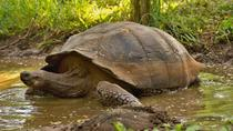 4-Day Galapagos Total Experiencie Tour