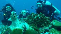 Diving Tour: Bahia Darwin and Carahua, Galapagos Islands, Other Water Sports