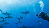 Diving Tour: Española Island, Galapagos Islands, Other Water Sports