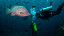 Diving Tour: Kicker Rock in the Galapagos, Galapagos Islands, Scuba Diving