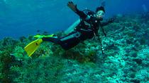Diving Tour: Punta Pitt in The Galapagos, Galapagos Islands, Scuba Diving