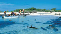 Full Day Española Island, Galapagos Islands, Day Trips