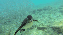 Full-Day Pinzon Island Snorkling, Fishing and La Fe Excursion Including Lunch, Galapagos Islands,...