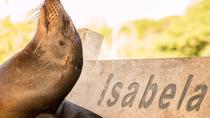 Full-Day Tour Isabela and Tintoreras, Galapagos Islands