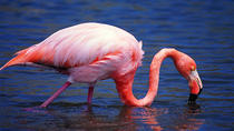 Isabela Island Wetlands Walking Tour, Galapagos Islands, Day Trips