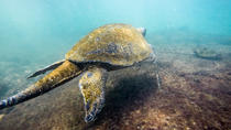 Snorkeling in the Galapagos Islands from Isabela Island, Galapagos Islands, Day Trips