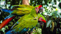 Tour to the Zoo El Pantanal in Guayaquil, Guayaquil, Zoo Tickets & Passes
