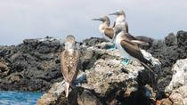 Tour to Tintoreras Bay from Isabela Island, Galapagos Islands, Day Trips