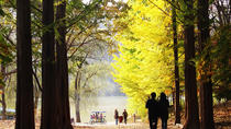 Nami Island and Petite France Day Trip Including Lunch, Seoul, City Tours