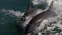 2-Hour Guided Dolphin Boat Tour Near Marco Island, Naples, Dolphin & Whale Watching