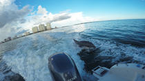 3-Hour Dolphin Tour near Marco Island, Naples, Dolphin & Whale Watching