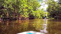 Blackwater River Paddle Board Tour, Naples, Stand Up Paddleboarding