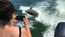 Dolphin Watching Tour near Marco Island, Naples, Dolphin & Whale Watching