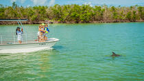 Marco Island Dolphin-Watching Tour, Naples, Dolphin & Whale Watching