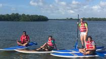 Marco Island Paddle Board EcoTours, Naples, Stand Up Paddleboarding