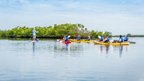 Rookery Bay Reserve Kayak Ecotour in Naples, Naples, Kayaking & Canoeing