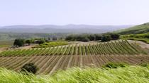 Central Israel Wine Tour From Tel Aviv, Tel Aviv