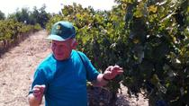 Northern Israel Wine Tour From Tel Aviv , Tel Aviv, Wine Tasting & Winery Tours
