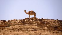 Wonders of Negev Mountains Private Tour from Tel Aviv, Tel Aviv, Private Sightseeing Tours