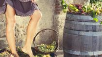 GRAPE STOMPING FROM CASTELLINA IN CHIANTI: traditions of the ancient Tuscan families, Siena,...