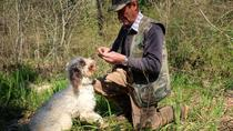 Private Truffle hunt in Tuscany from Florence, Florence, 4WD, ATV & Off-Road Tours