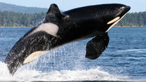 Whale Watching from Friday Harbor, Seattle, Air Tours