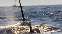 Join-A-Cruise 3 Night Full service Live-Aboard Whale Watching Trip, Seattle, Dolphin & Whale...