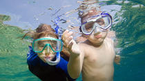 Private Snorkeling to Egmont, Outback, and Shell Key Islands, St Petersburg, Snorkeling