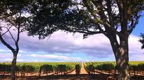 Amarone Wine Tasting, Verona, Wine Tasting & Winery Tours